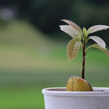 avocado-1488561_640