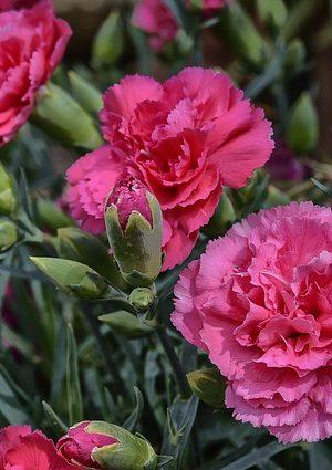flower-3469744_640