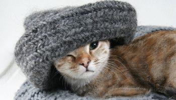 cat-2201460_640