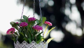 floral-967113_640