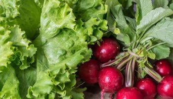 garden-radish-2204088_640