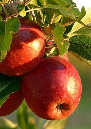 fruit-2905849_640