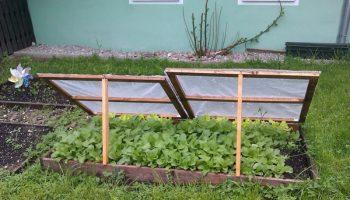grass-lawn-salad-backyard-furniture-garden-1022094-pxhere.com