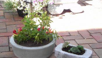 garden-diy-concrete-planters-cotcozy-106240