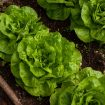 salad-4267063_640