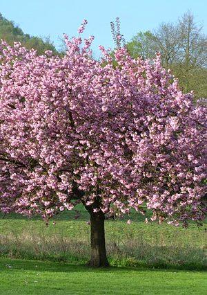 tree-934730_640
